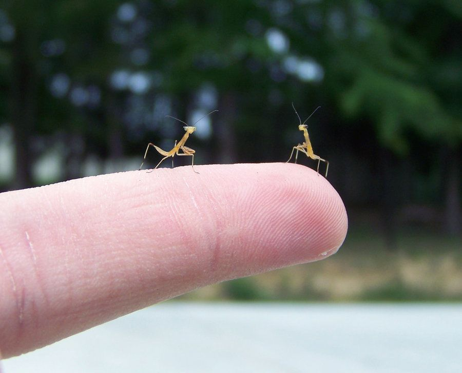 There Is One Thing Missing From Aww Baby Praying Mantis