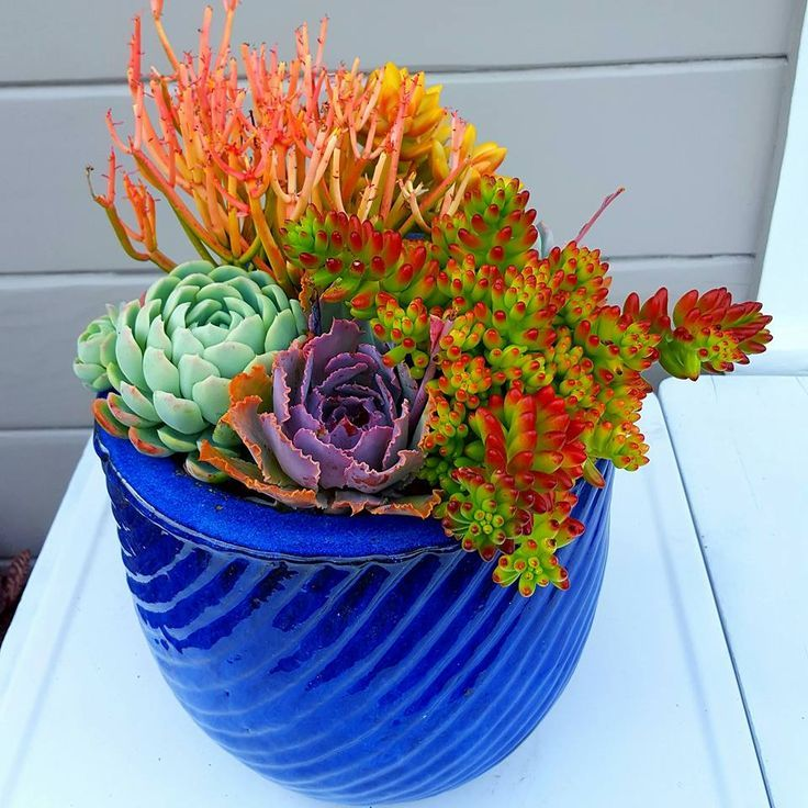 Colorful Succulent Arrangement By Nathan Brooke Corpus