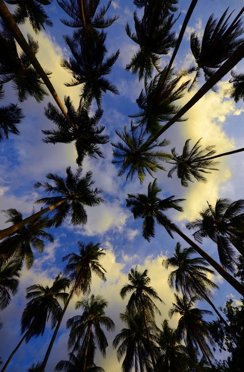 Amazing (Imgend) Blue Skies And Palm Trees Pictures Gallery