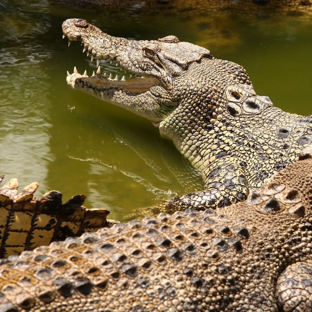 Looks Can Deceive Crocodiles Have Evolved More Than We