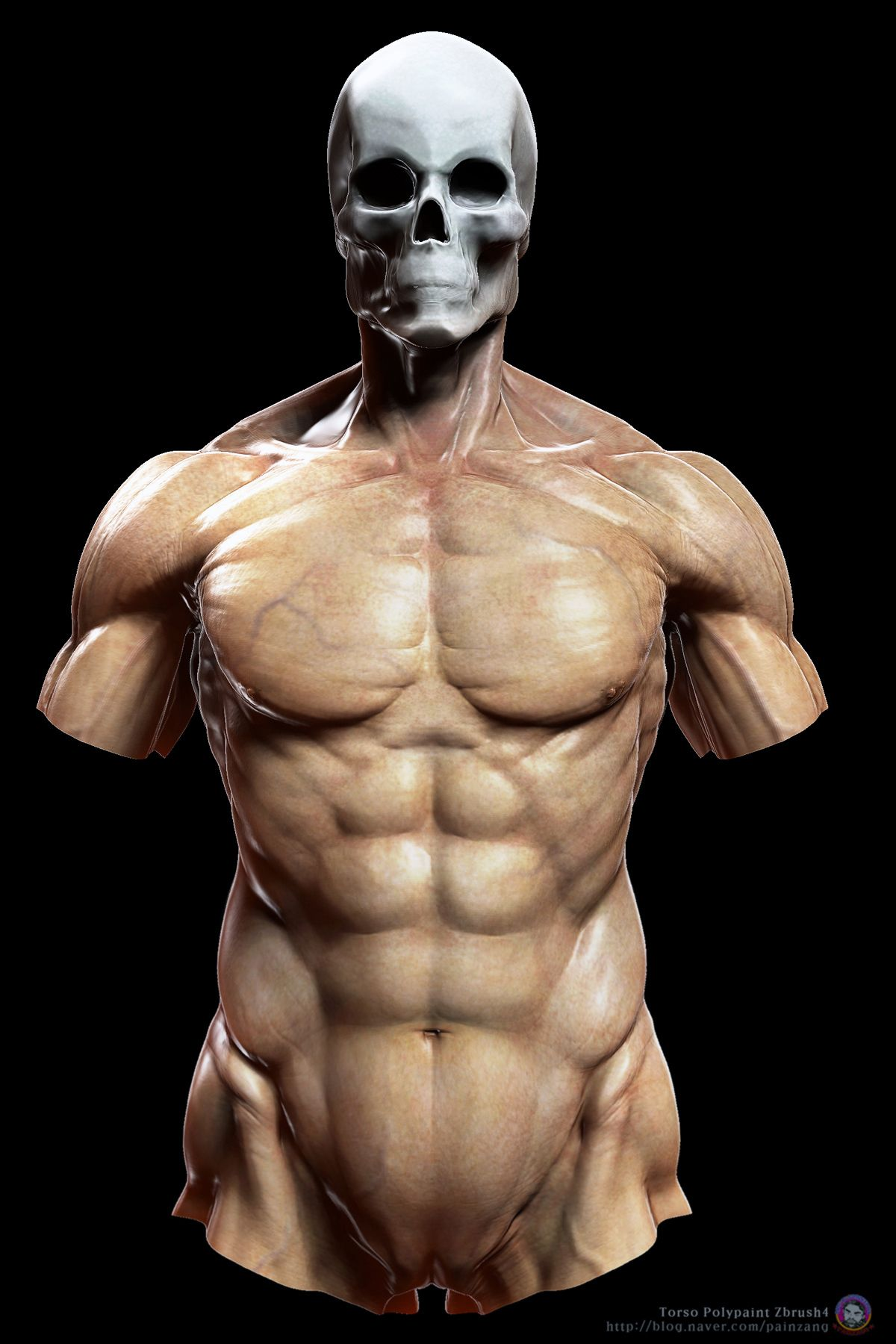 http://www.zbrushcentral.com/showthread.php?167407-human-anatomy ...