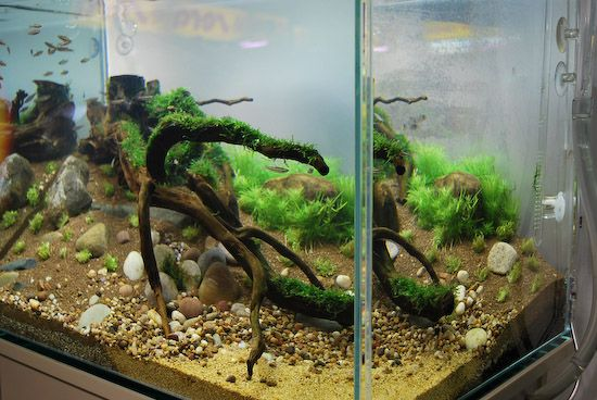 Riverbank Aquascape - Aquascape Art - The Green Machine ...