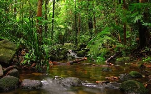 Image result for high resolution rainforest pictures (With