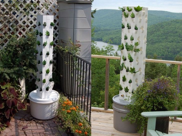 Image Of Hydroponic Vegetable Gardening In Tips