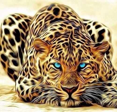 Photos Photo Tiger Tigre Animal Like نمر صور ابداع فوتوغرافي صور صور فوتوغرافي عجائب غرائب رائع حيوانات Animals Wild Cats Animals Wild