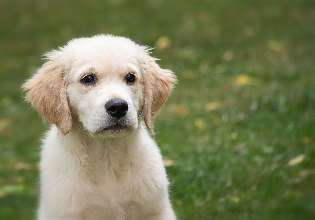 A Puppy Is Like An Ocean Of Love Doggosdoingthings Dogparkfun Doggy Dogmeme Dogswithjobs Dogchild Dogswag New Puppy Puppy Dog Images New Puppy Checklist