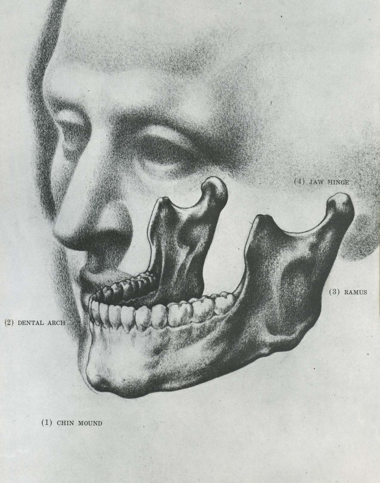 Contemporáneo Burne Hogarth Anatomía Dinámica Patrón - Anatomía de ...