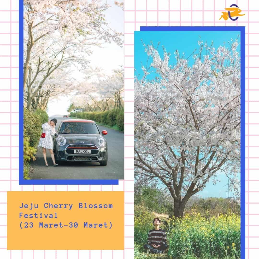 Jadwal Musim Sakura Di Korea 2019 Di 2020 Bunga Sakura Korea Tours