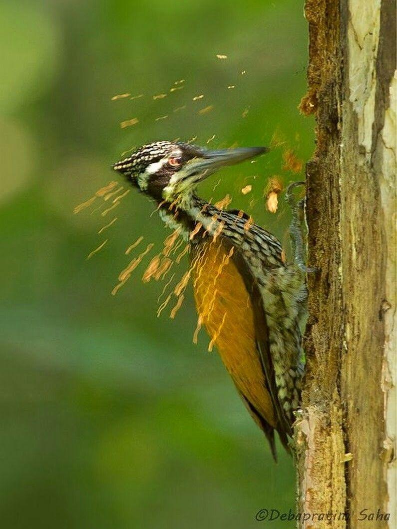 pin von petra de auf vogels | pinterest | vogel, spechte und