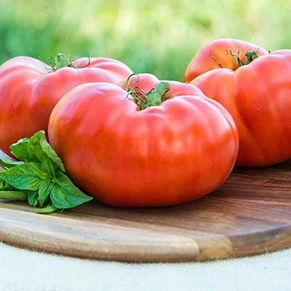 Pin By Ava Hearld On Tomato Brandywine Tomato Growing 400 x 300