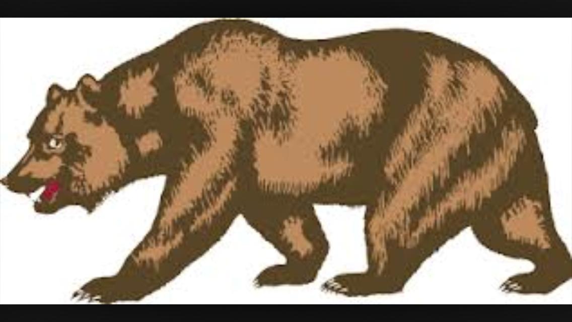 Detailed California Grizzly Bear California Bear California Bear Tattoos Bear Images