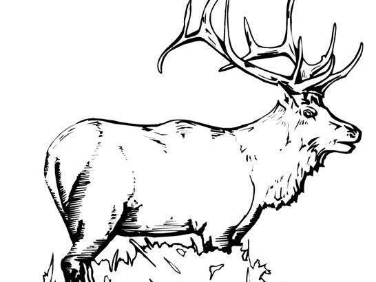 Elk Coloring Page elk coloring page coloring home 24 best