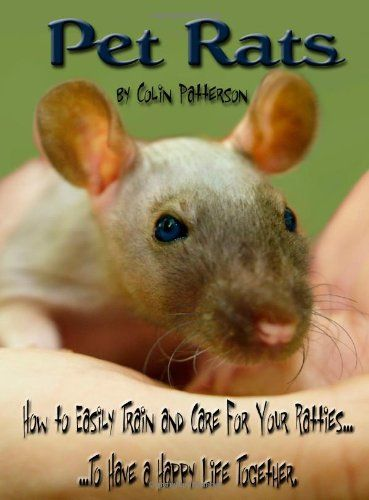 How To Train Your Pet Rat Pet Rats Rat Care Easy Pets