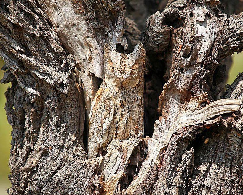 23 Camouflages Spectaculaires D Animaux Qui Ne Manquent Pas De Talent Camouflage Animaux Et Beaux Oiseaux