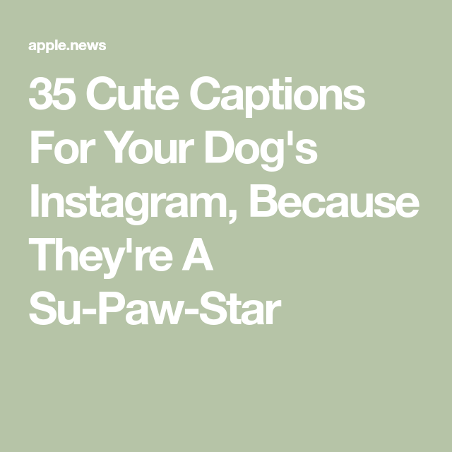 35 Cute Captions For Your Dog S Instagram Because They Re A Su Paw Star Cutepuppyinstagramcaptions Dog Instagram Captions Cute Captions Funny Dog Captions