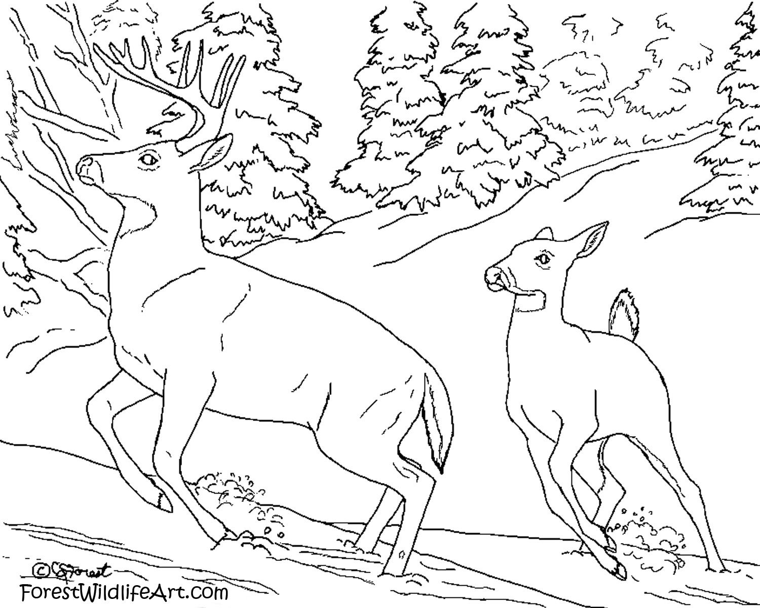 realistic animal coloring pages free - Baby Arctic Animals Coloring Pages