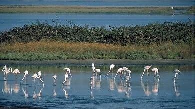 Delta del Po e Appennino diventano riserve dell'Unesco