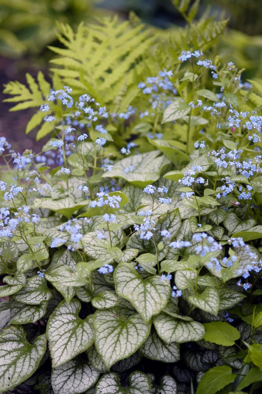 Perennial Flowers For Shade Gardens Shade Garden Pinterest