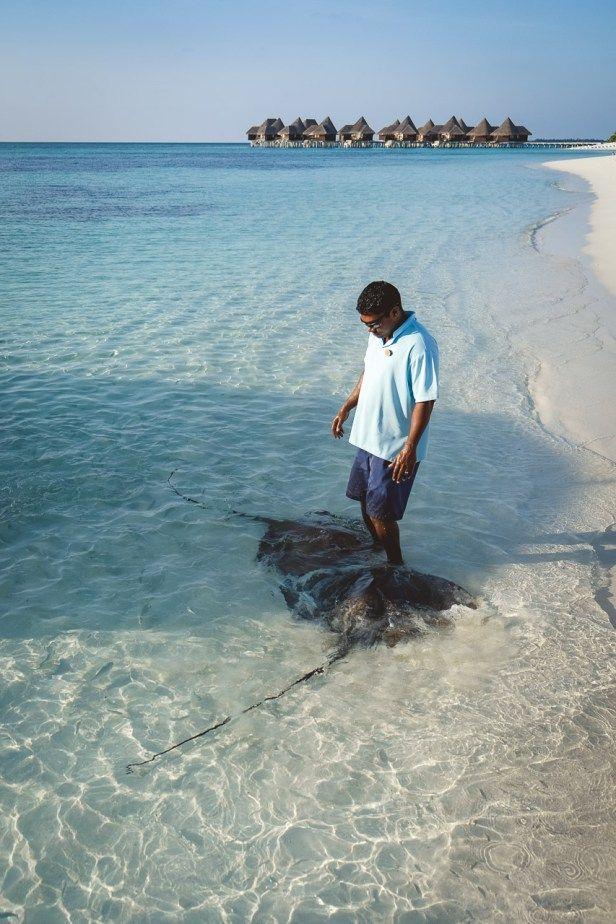 Coco Palm Dhuni Kolhu Malediven Luxus Tierschutz Romantik Im