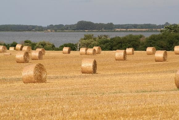 Country Life • Straw Bales