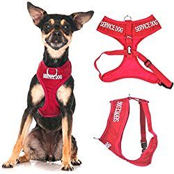Service Dog Do Not Disturb Dog Is Working Red Color Coded Non