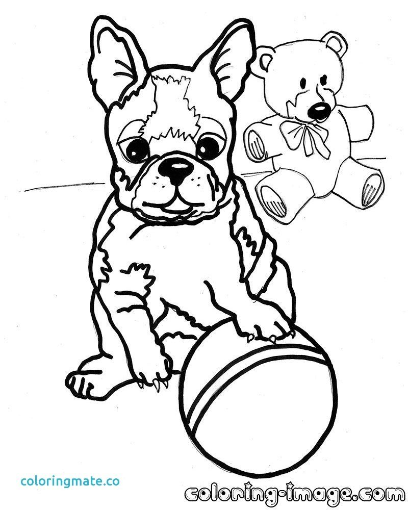 Coloring Pages Boston Terrier Free Puppy Coloring Pages Dog Coloring Page Witch Coloring Pages