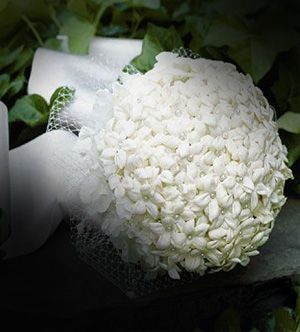 همسات عاشق و ورد الياسمين منتديات قسوة وداع Roses Blanches Rose