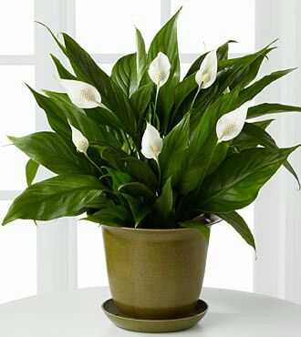 I love plant... | Home and furniture and decorations | Pinterest ...