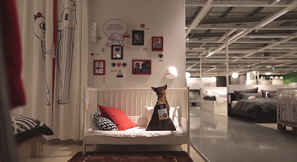 Ikea Has Found A Genius Way To Get People To Adopt Pets While Shopping For Furniture