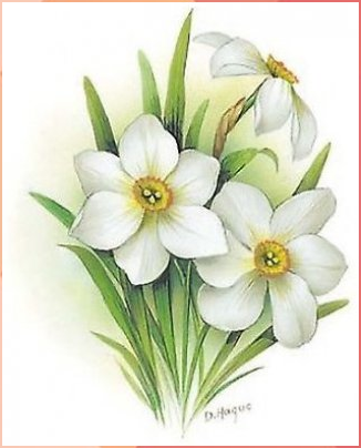 Details about Flower of the Month December Narcissus
