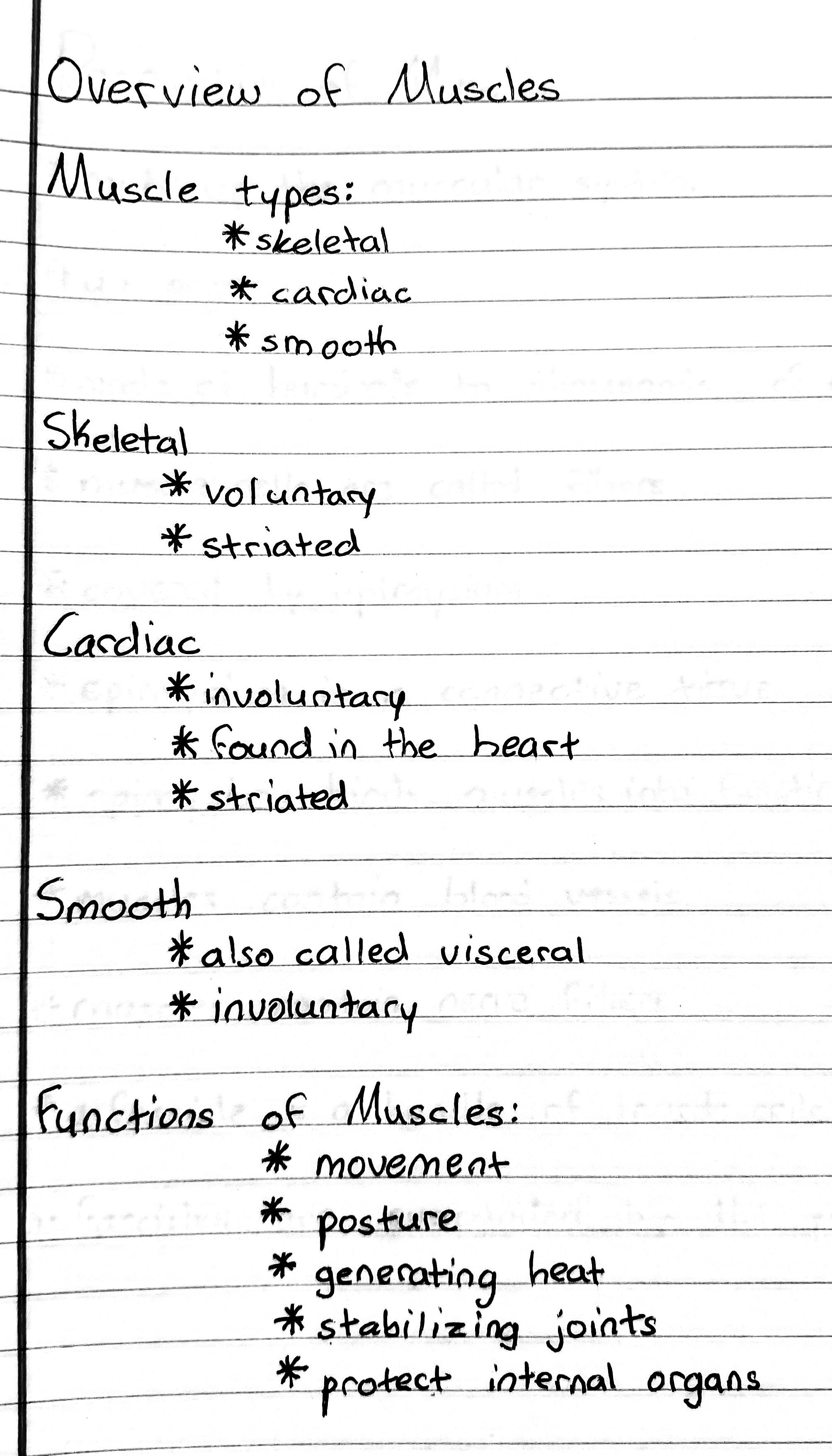 Overview Of Muscles