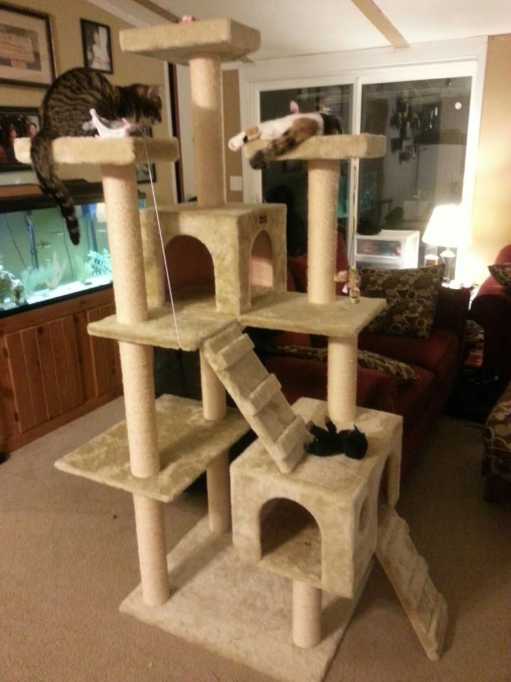 Awesome cat castle just plain cool pinterest cat for Castle cat tower