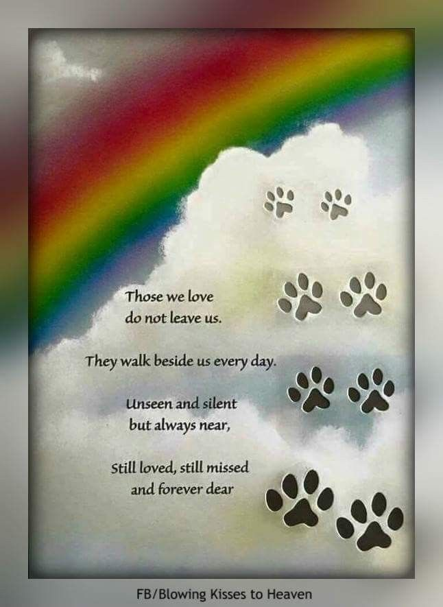 Pin By Wanda Riggan On All Dogs Go To Heaven In Loving Memory Of