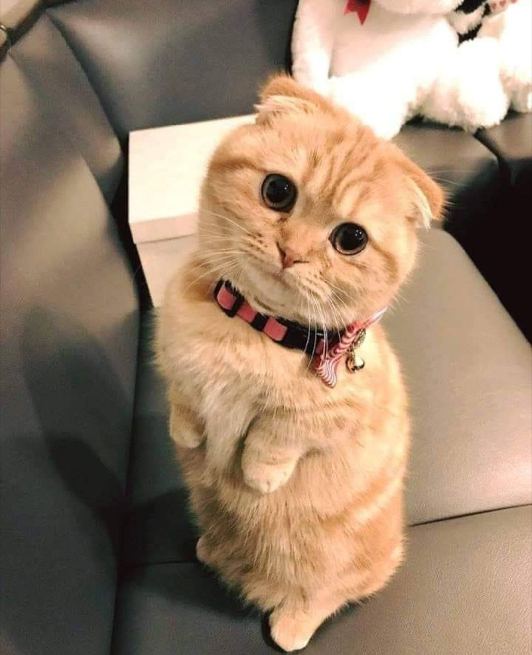 Humor Kucing Lucu Humor Kucing In 2020 Cute Baby Cats Baby Cats Cute Cats And Kittens