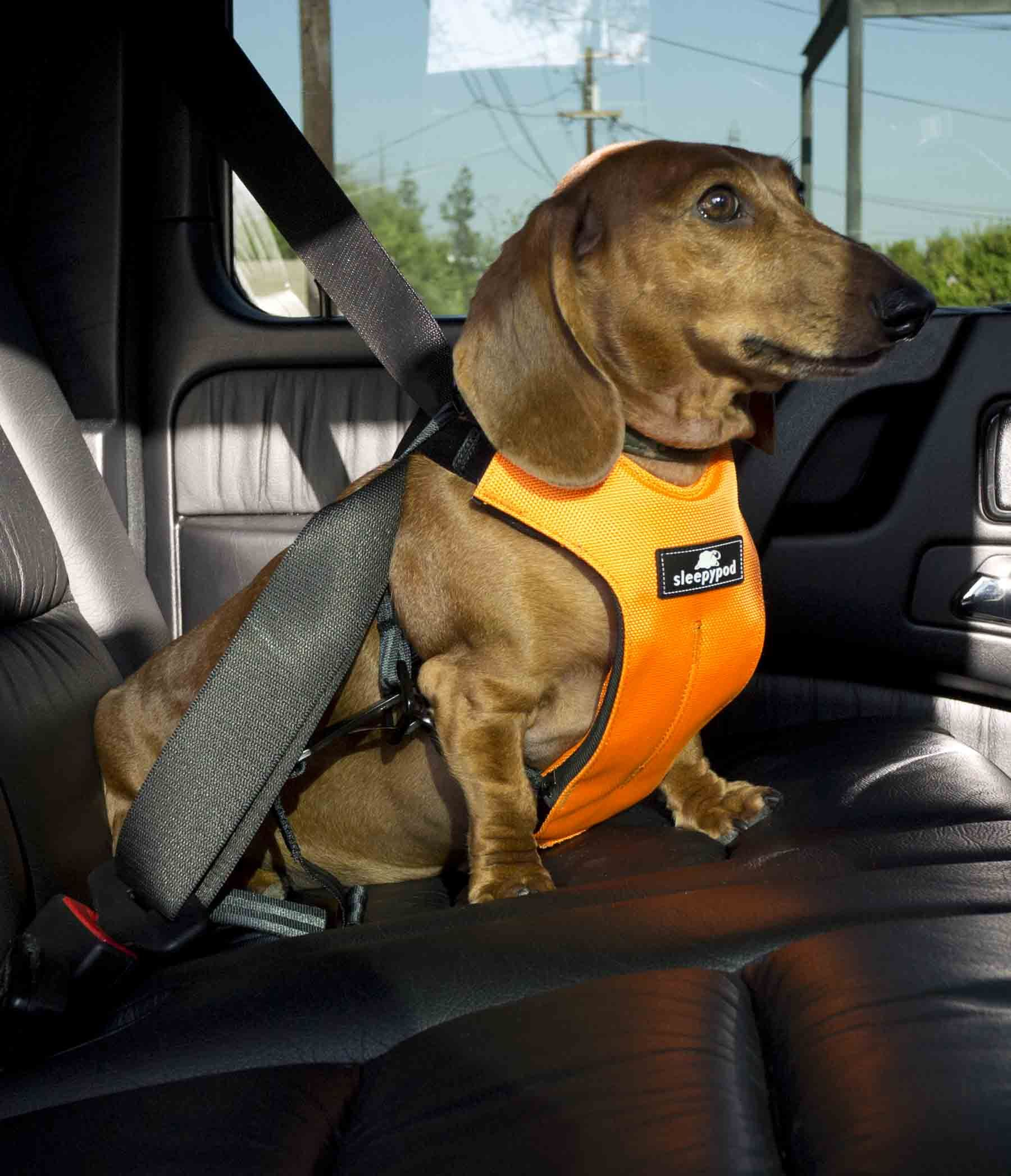 Sleepypod Clickit Utility Top Performing Dog Harness Dog