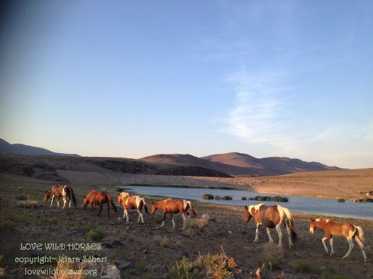 safe act for horses and burros | horses were OVER populated, but the truth is wild horses and burros ...