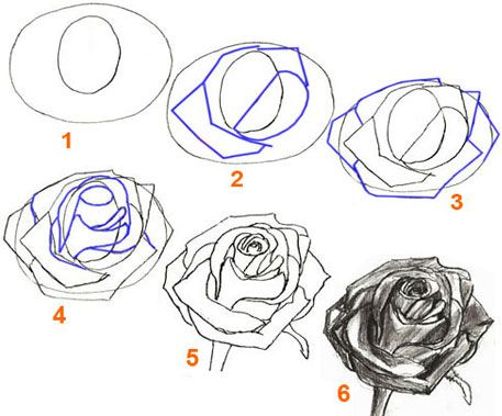 how to draw and color a rose step by step