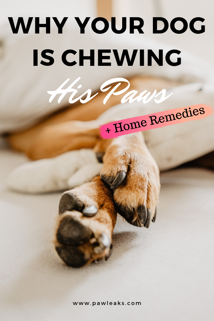 7 Soothing Foot Bath Recipes For Your Dog S Itchy Paws Dog Biting Dog Paws Why Do Dogs Lick