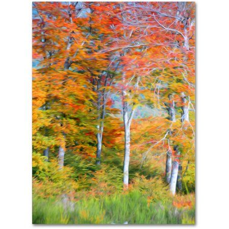 Trademark Fine Art The Line it Curves Canvas Art by Philippe Sainte-Laudy, Size: 16 x 24, Multicolor