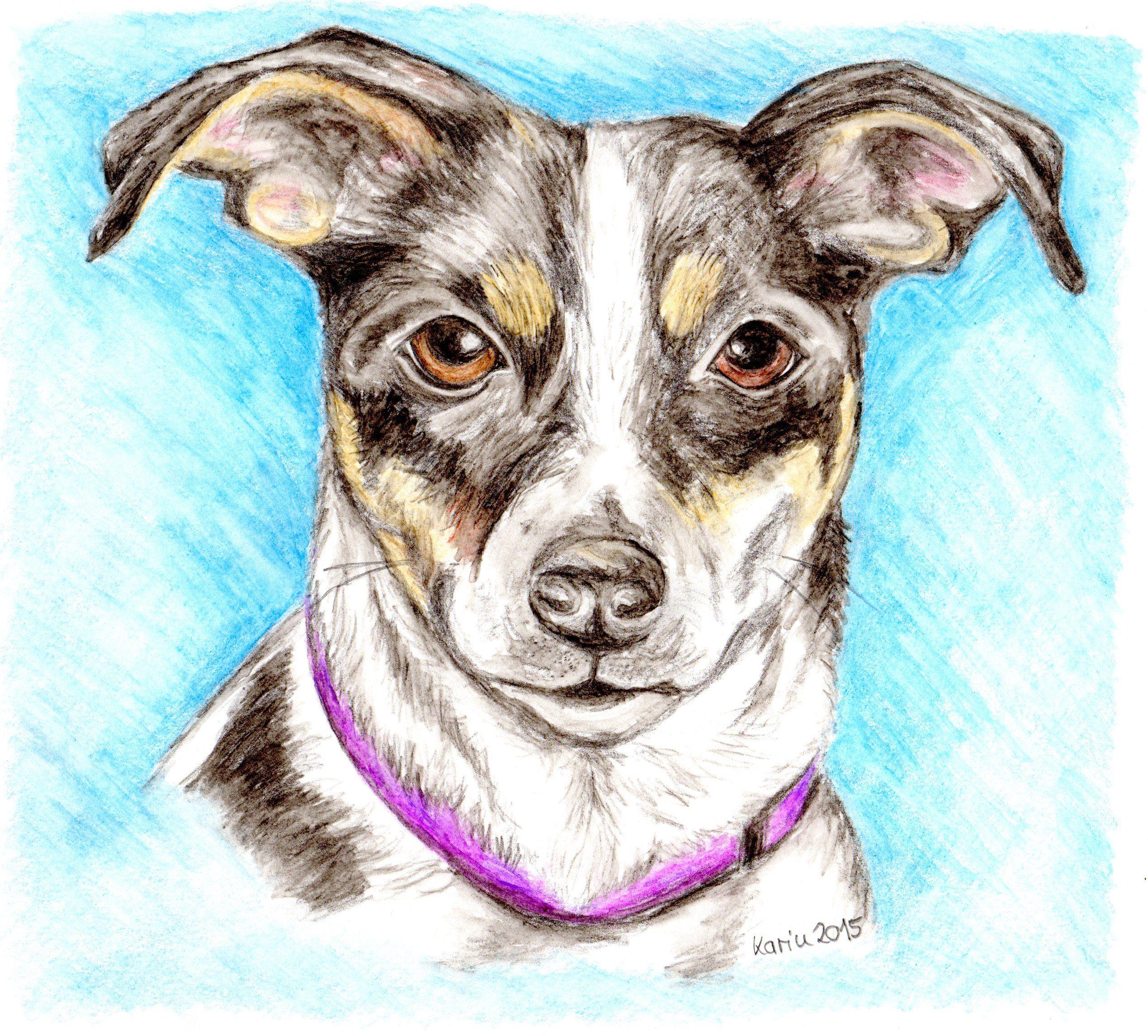Jack Russell Terrier Amy, Aquarellfarbstiftzeichnung