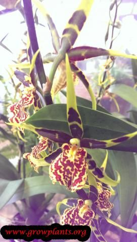 Photo of Banfieldara plants