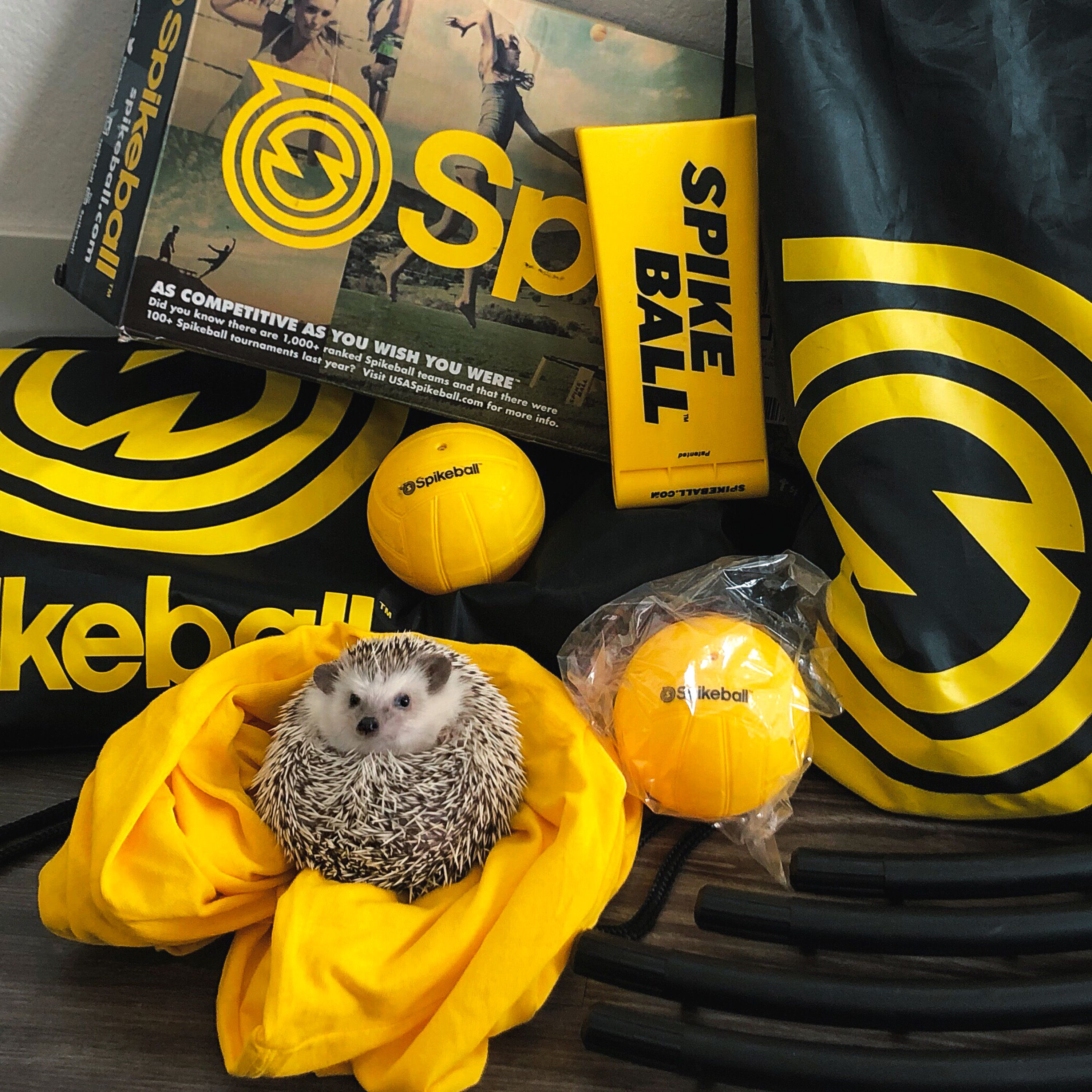 how to play spikeball rules