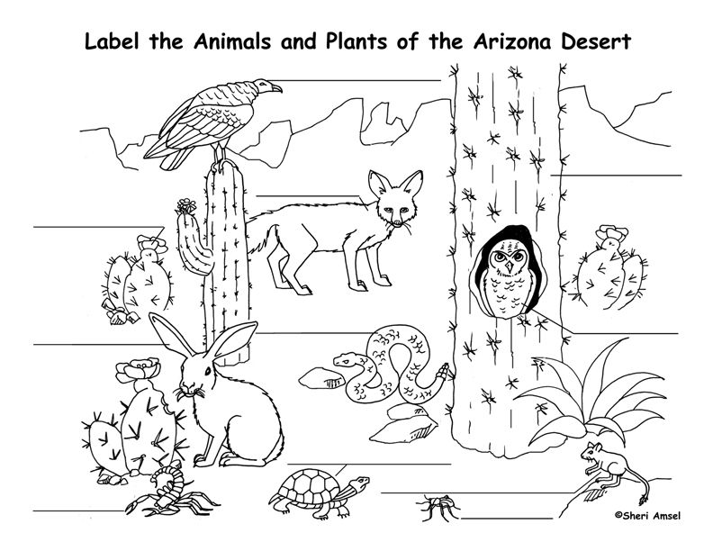 B Desert B B Habitats B Colour Desert Animals Coloring