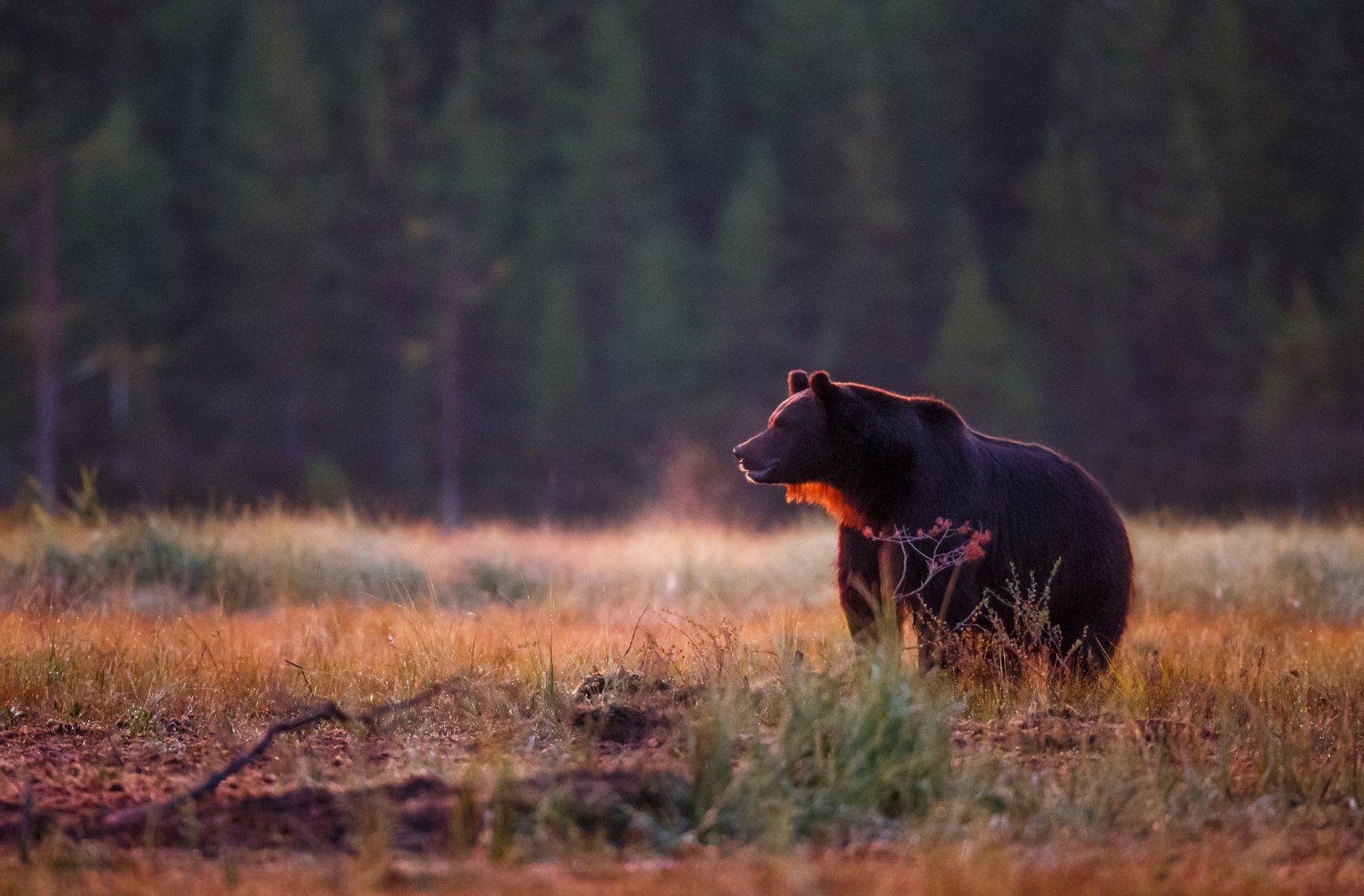 Free Black Bear Wallpapers Wallpaper 1600 1200 Bear Wallpaper 50 Wallpapers Adorable Wallpapers Bear Wallpaper Bear Pictures Bear