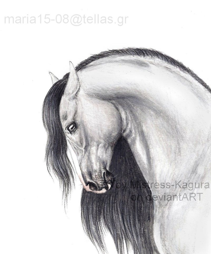 horse face anatomy - Google Search   Animals   Pinterest   Face ...