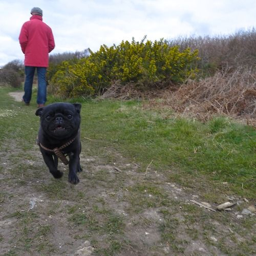 Hover Pug preparing for takeoff