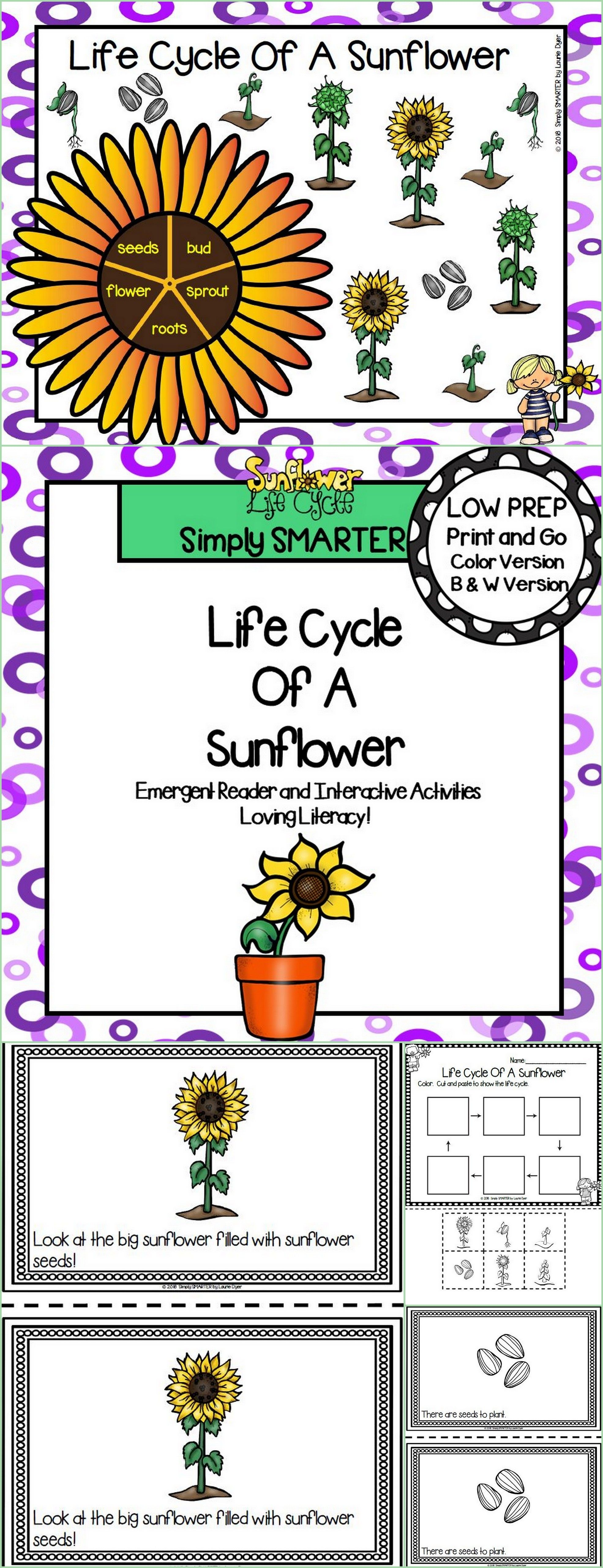 Life Cycle Of A Sunflower Emergent Reader Book And