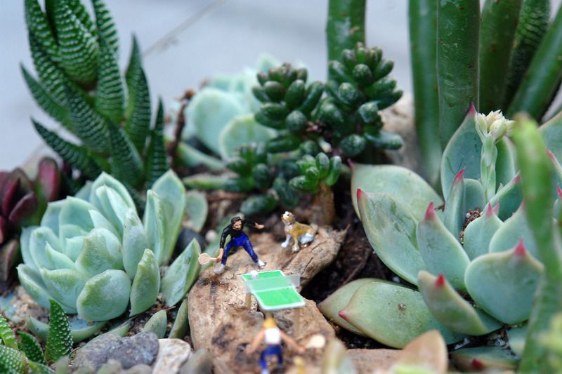 Tiny Terri Planty Terrariums