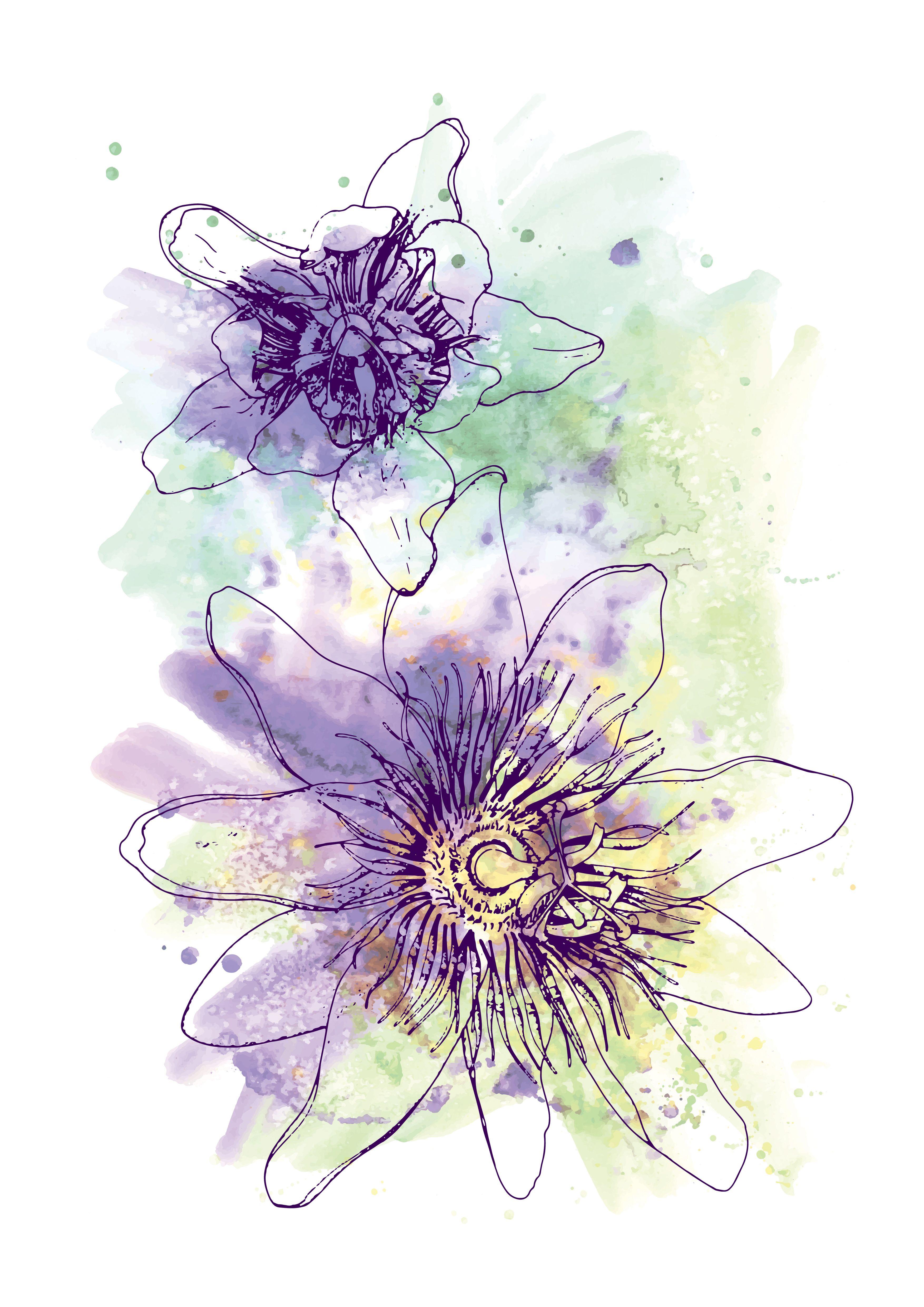 Purple Passionflower, Botanical Illustration, Flower Print, Wall Art ...