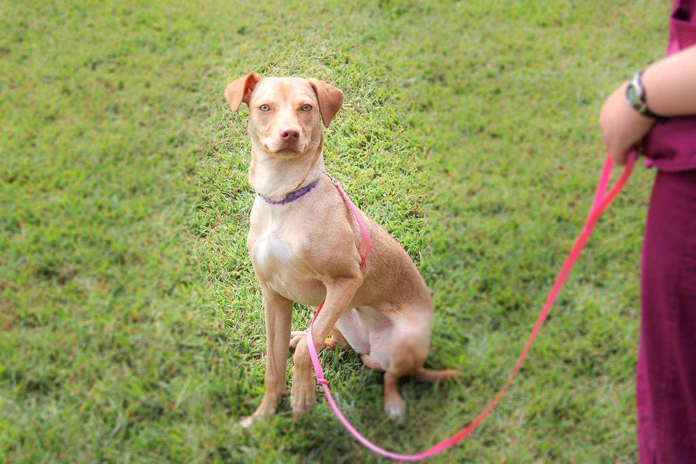 Adopt Pearl $125 on   Dog adoption, Animal hospital ...